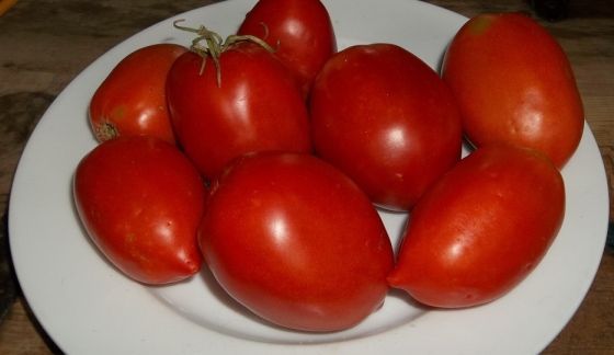 44 best images about top picks for the best tasting tomato