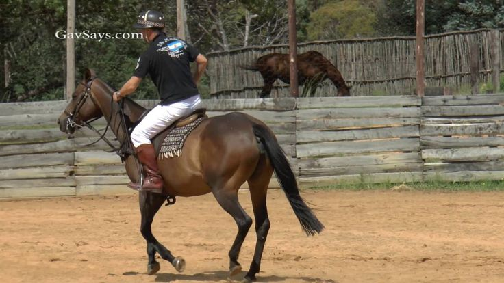 #HorseTraining: Lead Changes - The Mechanics of & How-to. What is Lead…