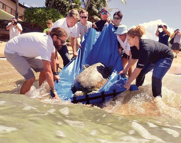 Federal fisheries officials released the 1000th sea turtle rehabilitated in the Hawaiian Islands! The agency in Hawaii has been responding to dead or injured sea turtles for more than 30 years. The 1000th rehabilitated turtle a 150-pound juvenile male was released Friday afternoon. http://ift.tt/2xnQ3Fl