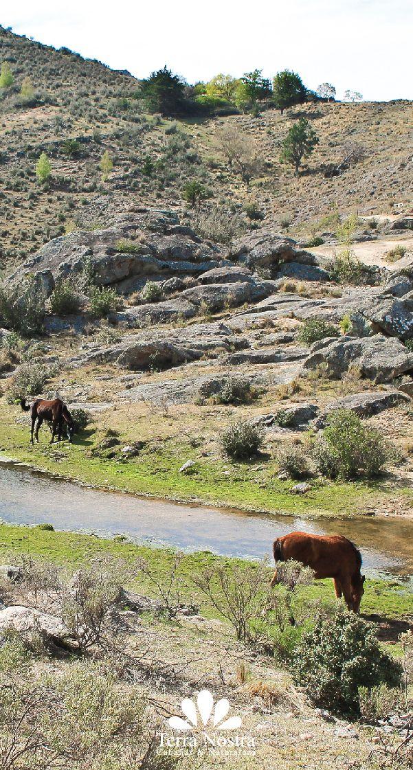 Ideal para tardes de cabalgatas! Cabañas Terra Nostra La Cumbrecita en Córdoba #TerraNostra #Travel #Trip #Argentina #Cordoba #LaCumbrecita #Pin #Cabañas #Facebook -->> http://bit.ly/TerraNostra