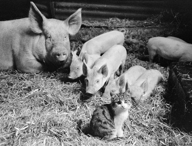 La Mamá Pig y su gatito   19 Photos That Prove Love Knows No Bounds