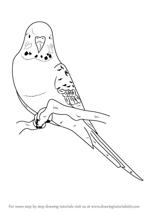Рисунок волнистого попугая карандашом
