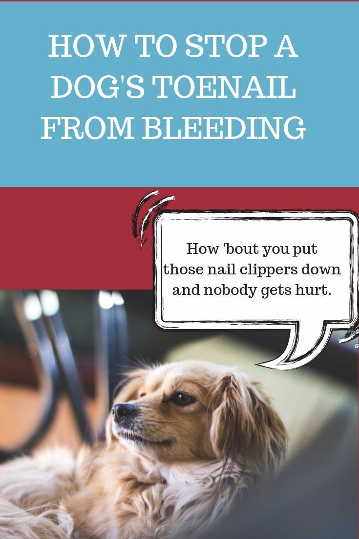 How to Stop a Dog\'s Toenail from Bleeding | Dog | Dog nail bleeding ...
