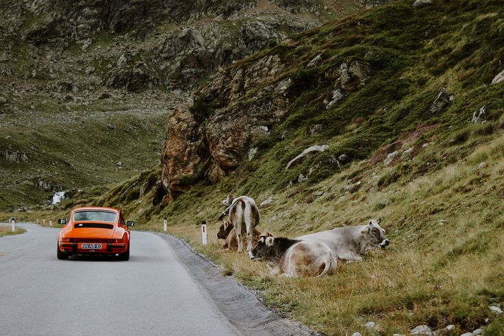 Austria. traveling. Porsche. cows. lifestyle. feed.