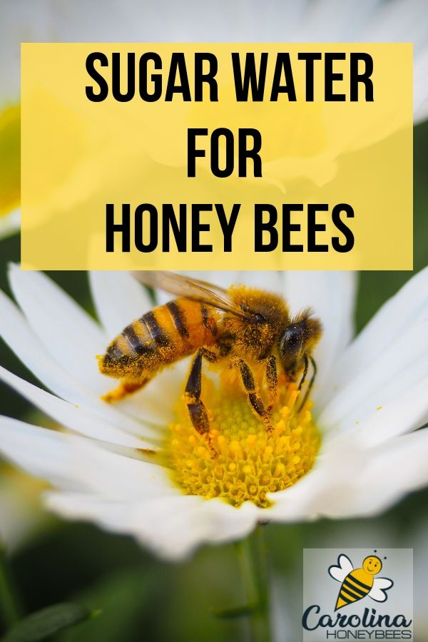 Feeding Bees Sugar Water How Why Feeding Bees Bee Food Bee