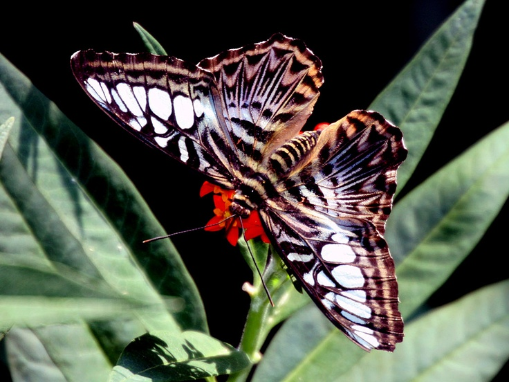 Butterfly / Schmetterling