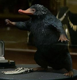 A Niffler was a creature with a long snout and a coat of black, fluffy fur. They were attracted to shiny things, which made them wonderful for locating treasure, but this also meant that they could wreak havoc if kept (or set loose) indoors. Nifflers were rodent-like creatures with a long snout and a coat of black, fluffy fur. Native to Britain, they lived in burrows as deep as twenty feet below ground, and produced six to eight young in a single litter.