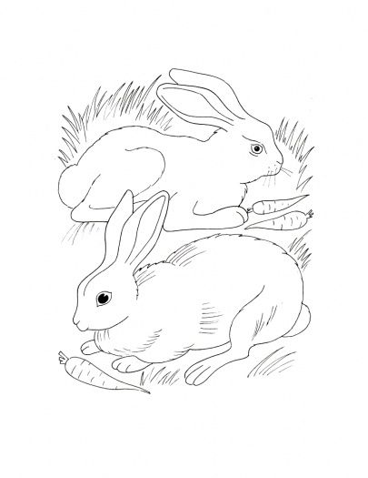 285 best rabbits crafts images on Pinterest Easter crafts, Fabric - best of bunny rabbit coloring pages print