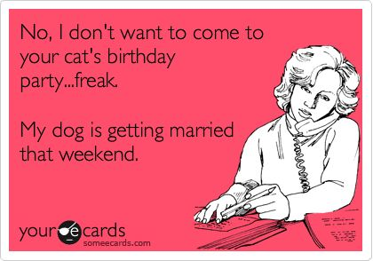 : Cat Birthday Parties, Laughing, Pet, Quote, Get Married, Funny Stuff, Dogs Lovers, Humor, Ecards