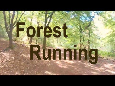 12 Minute Workout - 'Forest Running' - YouTube in 2020 - Pinterest