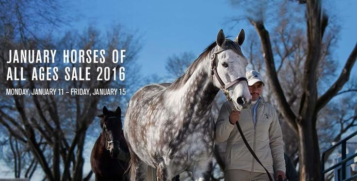Join us for the January Horses of All Ages Sale. View Catalog.