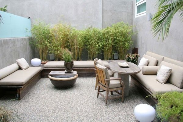 bamboo in planters