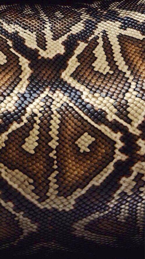 Snake skin pattern Snake wallpaper, Snake skin, Skin