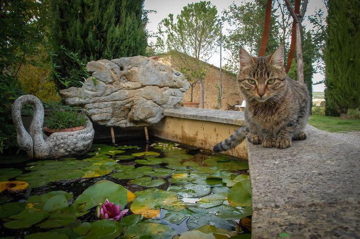 Best 20 art outside arte in giardino images on pinterest - Arte e giardino ...