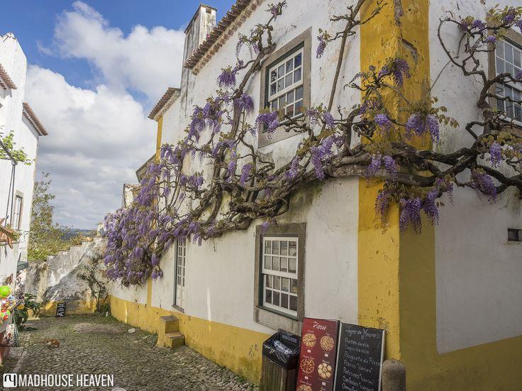 Wisteria house, Óbidos, Estremadura area, Portugal.