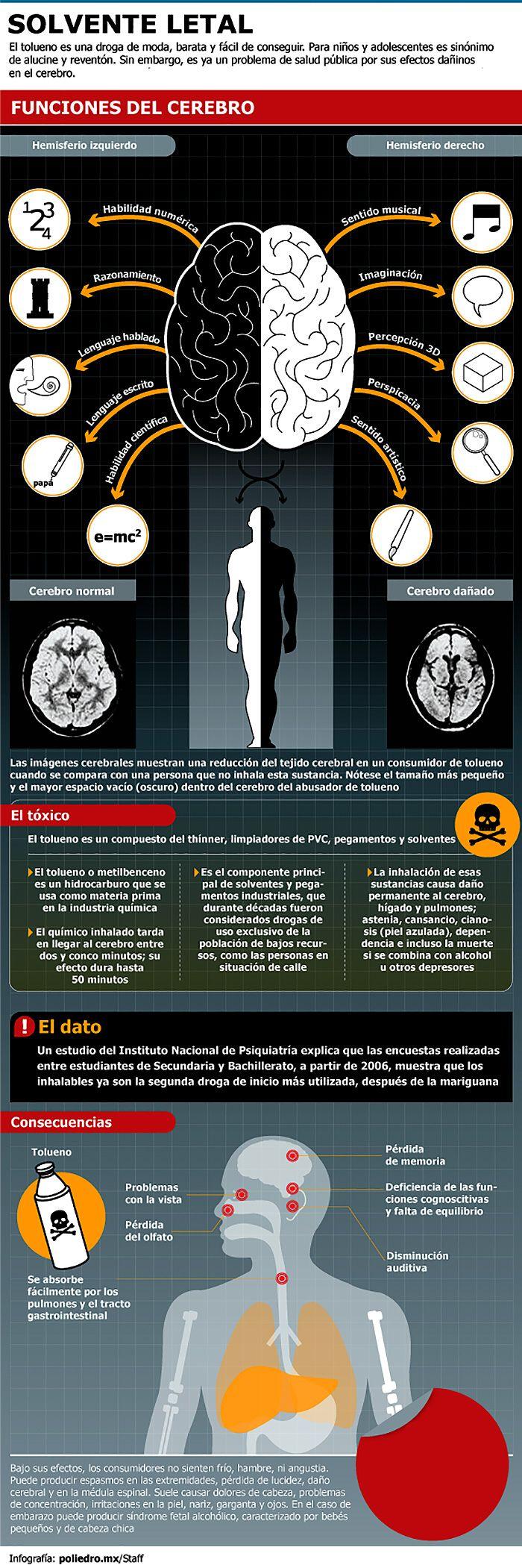 Mejores 107 imágenes de Neuroanatomia en Pinterest | El cerebro ...