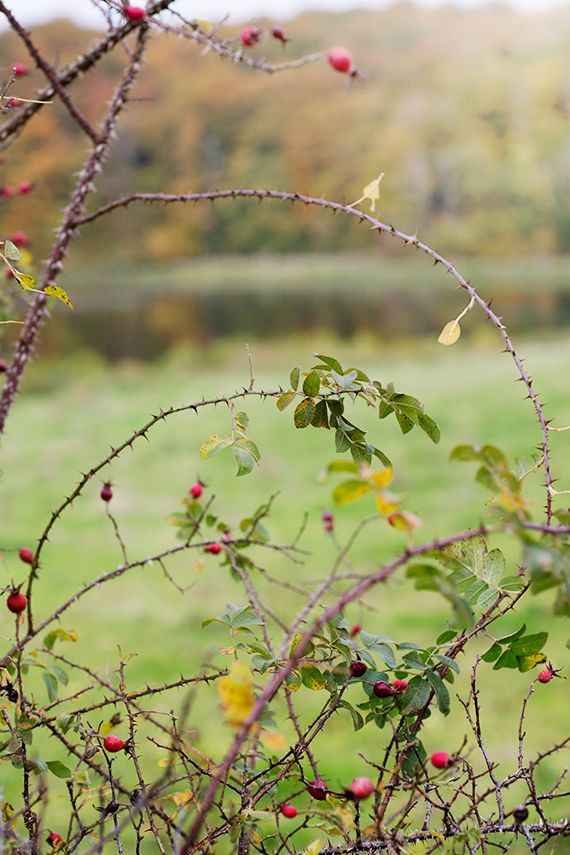An English flowering hedgerow