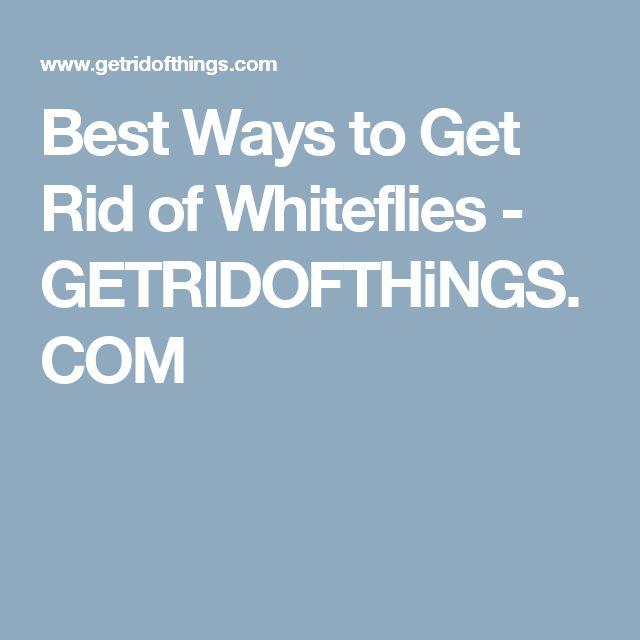 Best Ways to Get Rid of Whiteflies - GETRIDOFTHiNGS.COM