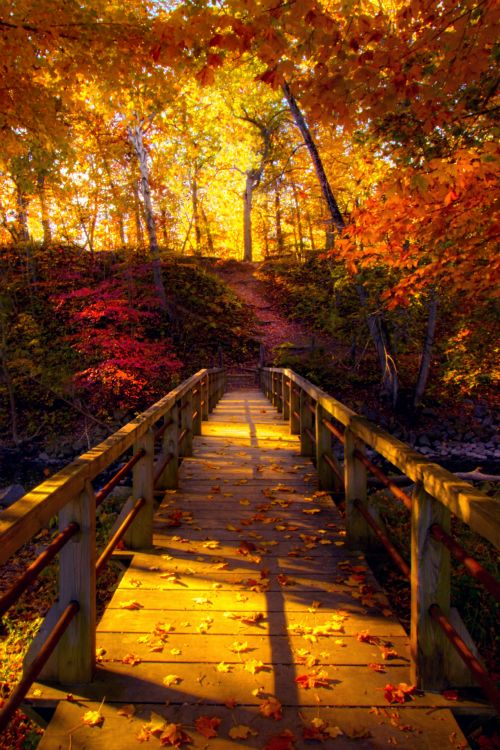 Glorious colors of fall meeting the sunshine! <pin by Sue Meraglia-Esposito on Autumn>