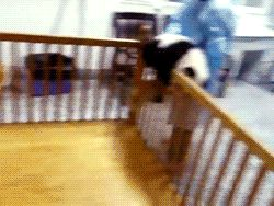 Endangered Animals Giant Panda Animals Giff #7891 - Funny Panda Giffs| Funny Giffs| Panda Giffs