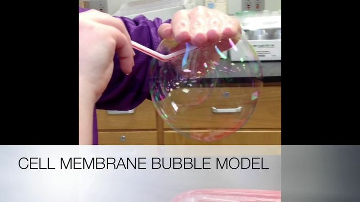 Cell Membrane Soap Bubble Lab. Soap bubbles behave a lot like cell membranes.  They're flexible and can self-repair.  This video highlights the use of soap bubbles to perform a cell membrane lab in a 10th grade biology class.  Several membrane properties are demonstrated, such as fluidity, self-repair, and the incorporation of membrane proteins.  The lab is simple to perform, has a lot of instructional value, and is just plain fun!