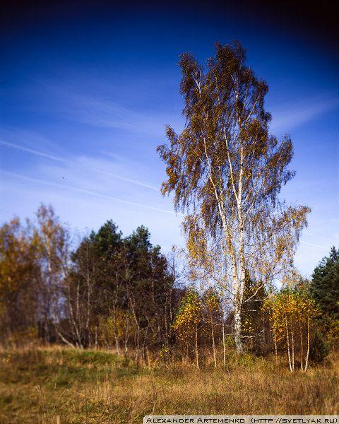 The Birch. Podol village. Vishnevolocki raion, Tverskaya oblast. Russia.    f8 1/(160-80) | f8 1/125  Linhof Technika III, Rodenstok 150mm, Velvia 100