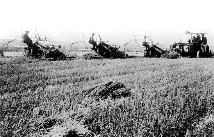 Cutting wheat by tractor, Perdue, Saskatchewan / Des tracteurs coupent le blé, Perdue (Saskatchewan) | by BiblioArchives / LibraryArchives