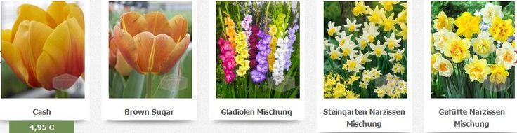 Blumenzwiebeln bestellen online günstigen preisen in unserem shop wenn sie online blumenzwiebeln kaufen Holland einfach und sicher bestellen wollen. http://www.superblumenzwiebeln.de/fragen