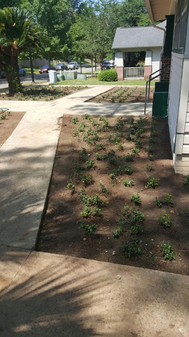 Starting the ground cover