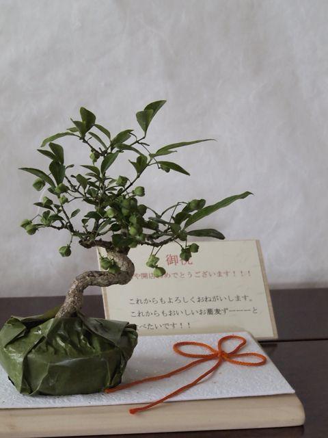 小品盆栽などの贈答には『立札』をおつくりしております。