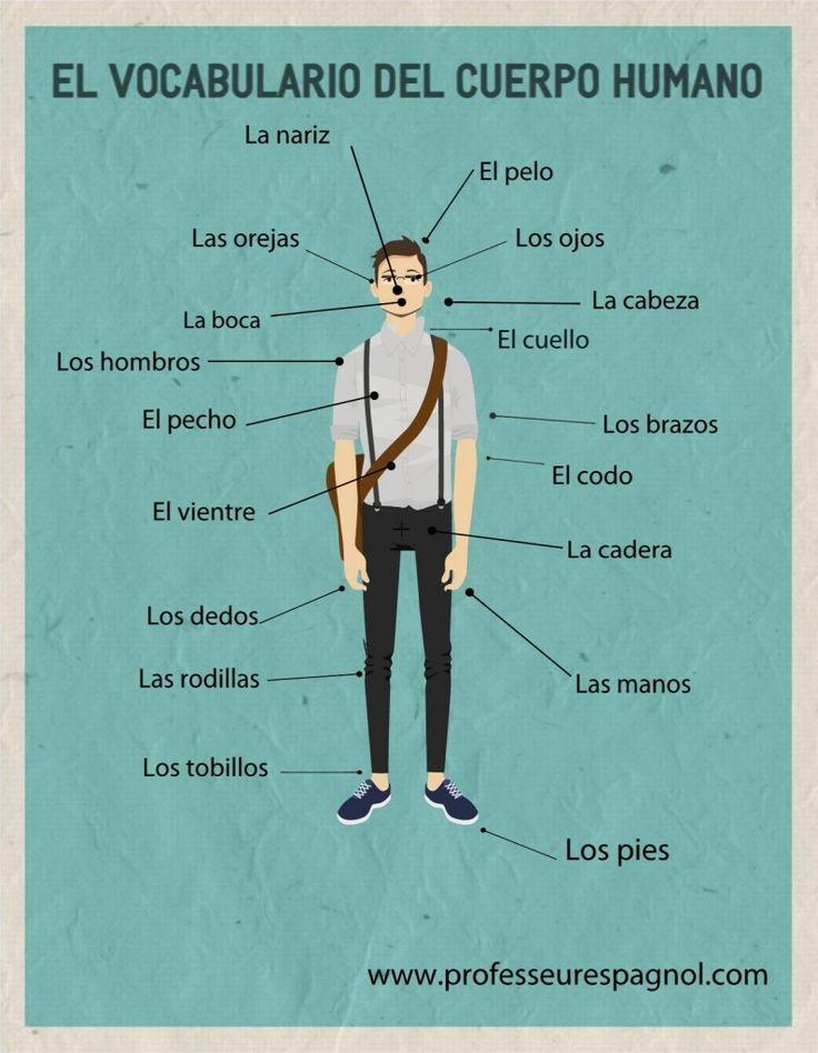 El vocabulario del cuerpo humano, nivel A1.