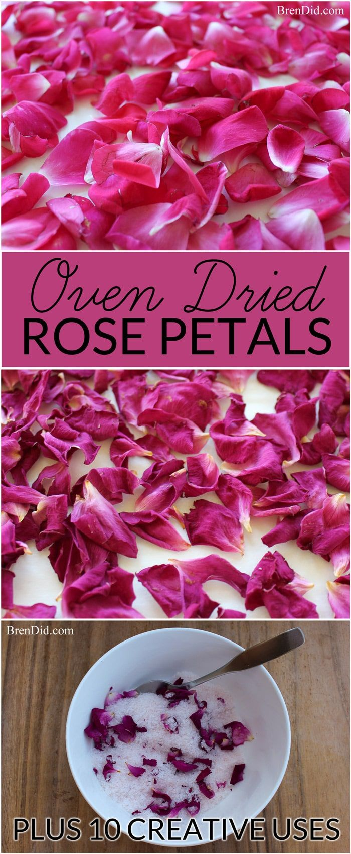 how to dry rose petals | rose petals | dried roses - Learn how to dry rose petals for natural body care recipes, crafts, décor & confetti.  via @brendidblog