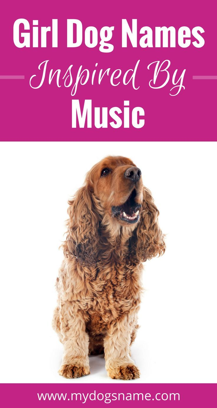 These gorgeous dog names are music to our ears! Check out our list of dog names inspired by music.