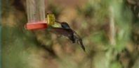 Hummingbird Sugar Water Recipe | eHow.com