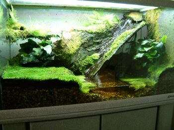 Terrarium with water features clever use of a small for Water lizard fish