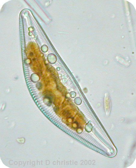 62 best ﹆ BIO images on Pinterest   Leaves, Botany and ...