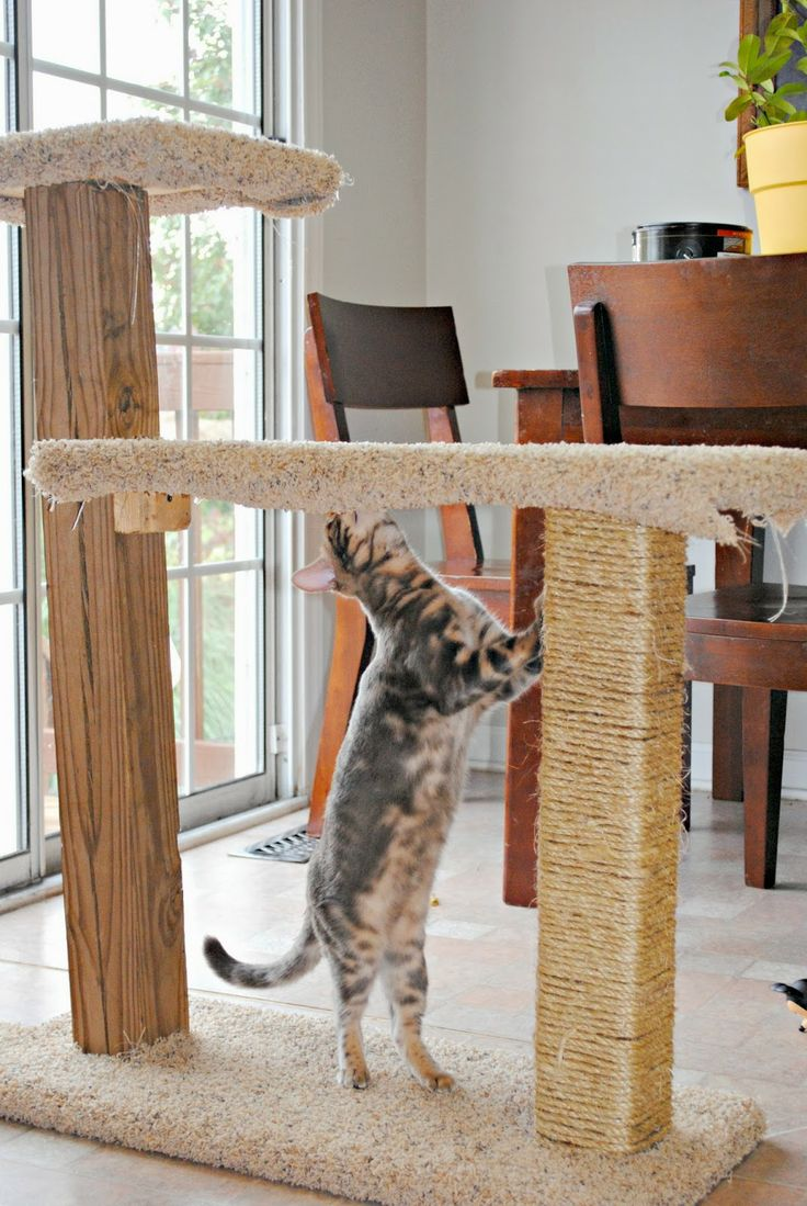 18 best images about diy cat scratchers on pinterest cat for Homemade cat post