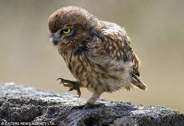 51 melhores imagens de for yu no pinterest corujas animais e como civettati adoro fandeluxe Choice Image