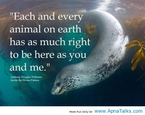Each and every animal has as much right to be here
