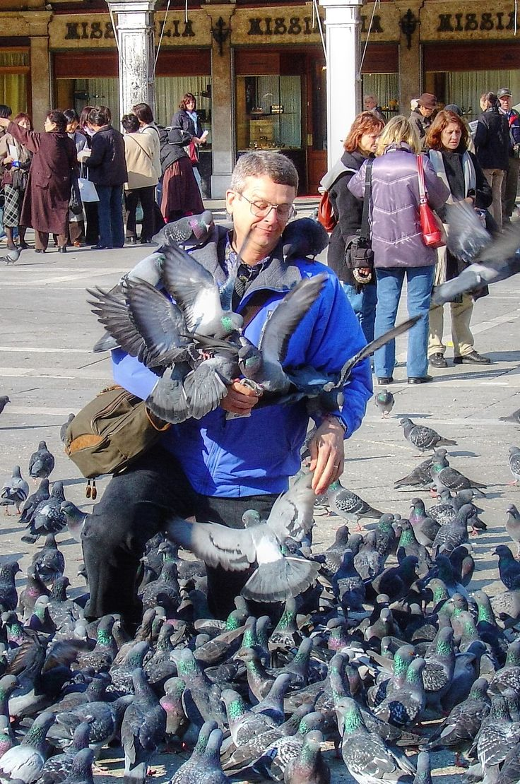 Pigeons - - - - - Feed the pigeons in San Marco at your own risk as this gentleman found out. #italy #venice