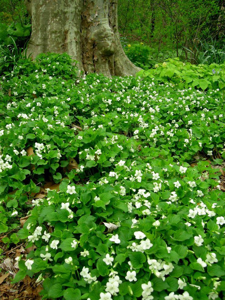 Best Favorite Plants Images On Pinterest Native Plants
