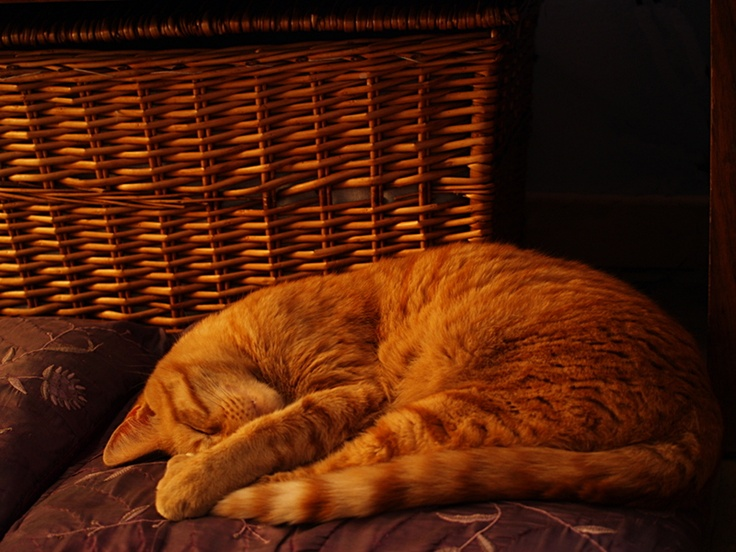 Baggins the cat in the late afternoon light.