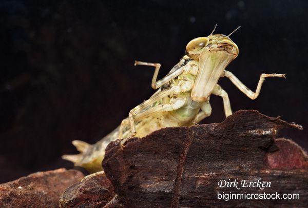 Les 25 meilleures id es de la cat gorie larve de mite sur - Larve de mite ...