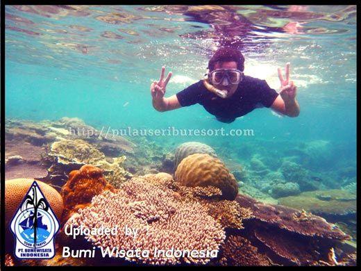 PULAU SERIBU - Mengingat antusias para wisatawan yang sangat besar, Kepulauan Seribu memiliki peluang menjadi Kawasan Wisata Bahari terfavorit di Indonesia.
