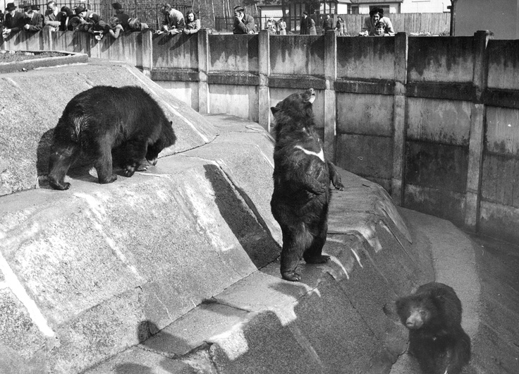 Himalayan bears: when they stood on the highest point in their area, they were visible from outside the zoo