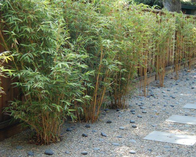 1000 id es sur le th me haie bambou sur pinterest - Tout sur le bambou ...