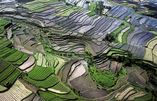 Aerial view of rice terraces, Bali, Indonesia
