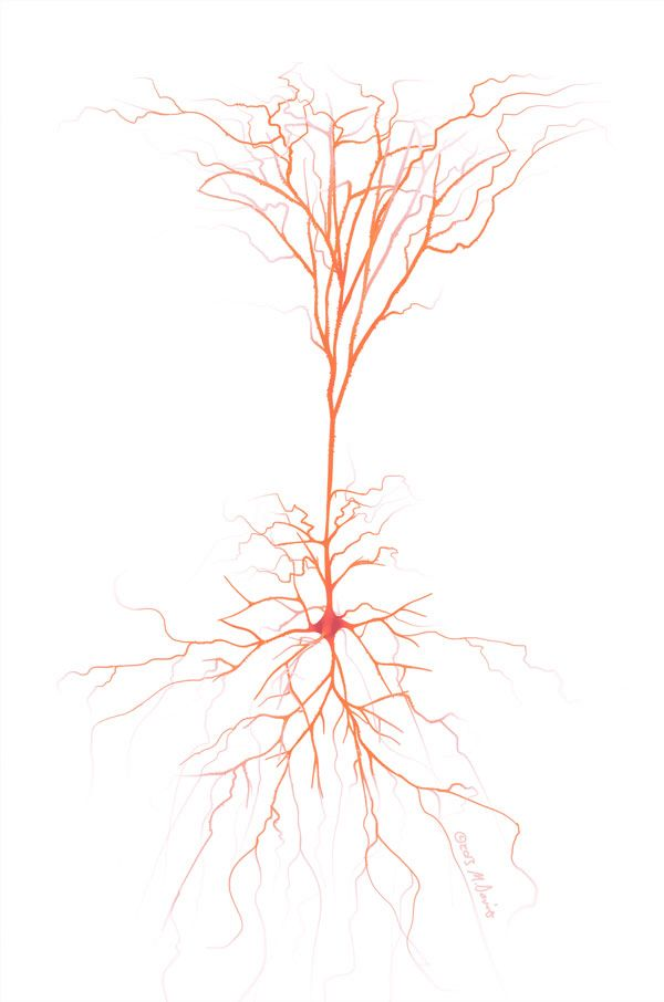 Pyramidal neuron into a tree at the top