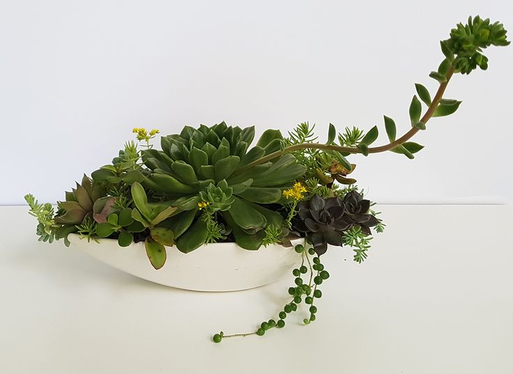 Hors d'oeuvre dish with a little collection of found plants.