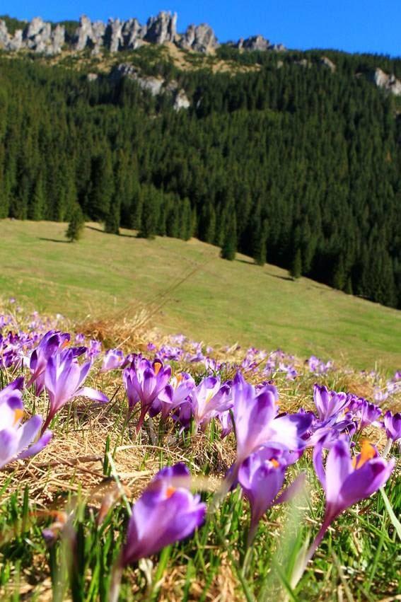 Springtime in Tatry mountains, Poland by Ania Katroshi